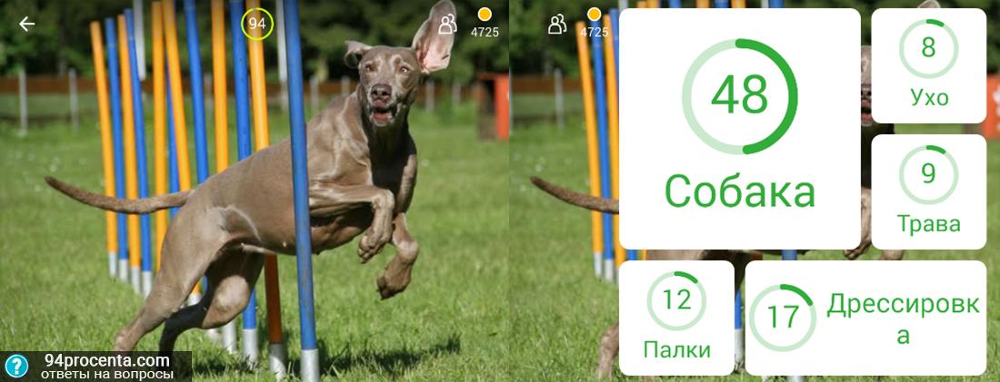 Картинка с собаками 94 процента ответы